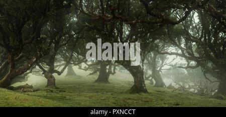 Panoramablick von Märchen Bäume im nebligen Wald mit Kopie Raum - Stockfoto