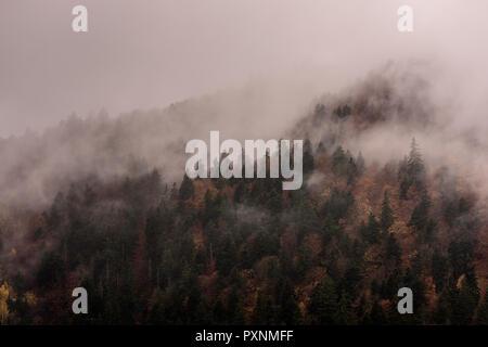 Nebel über Pinienwälder. Misty Morning view in nassen Bergwelt.
