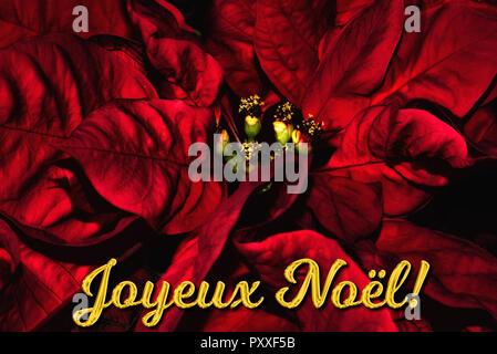 Weihnachtsgrüße In Französisch.Joyeux Noel Frohe Weihnachten Auf Französisch Geschrieben Mit