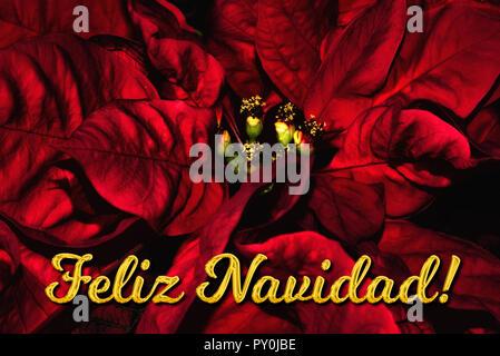 Weihnachtsgrüße Auf Spanisch.Frohe Weihnachten Text Auf Spanisch Feliz Navidad über Pine Tree
