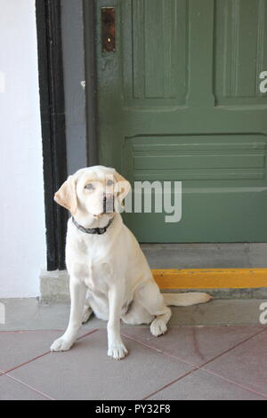 Hund sitzt an der Tür - Stockfoto