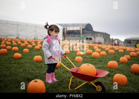 Kleinkind Mädchen Kommissionierung Kürbis in Farm - Stockfoto
