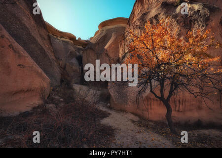 Kappadokien, Türkei. Fairy Chimney. Multihead Stein Pilze im Tal der Mönche. Pasabag Tal. - Stockfoto
