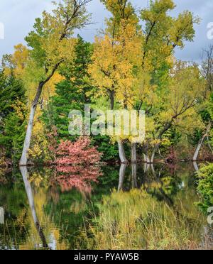 Ein kleiner Teich in Oklahoma City durch Bäume im Herbst Farbe umgeben;. - Stockfoto