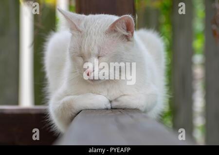 Weiße Katze ist Schlafen draußen im Garten im Sommer - Stockfoto