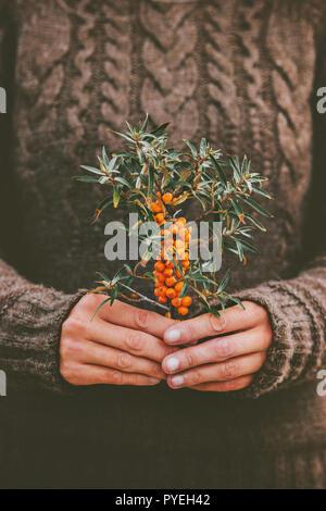 Frau Hände halten Sanddornbeeren pflanze Bio Lebensmittel gesunde Lebensweise gemütliche Strickpullover skandinavischen hygge Stil - Stockfoto