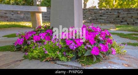 Schönen violetten Blüten um einen Beitrag in einem Garten - Stockfoto