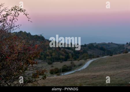 Wild Weißdornbusch bei Sonnenuntergang in der ländlichen Gegend bei Sonnenuntergang - Stockfoto