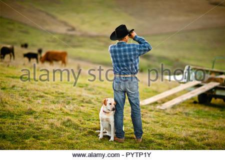 Reifen alter bauer mit seinem hund auf einem traktor in seinem stall