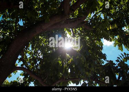 Baum mit peeking Sun - Stockfoto