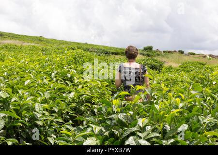 Ssezibwa, Uganda. 23. April 2017. Ein weißes Mädchen in einem schwarzen und weißen Kleid führen durch eine Teeplantage. - Stockfoto