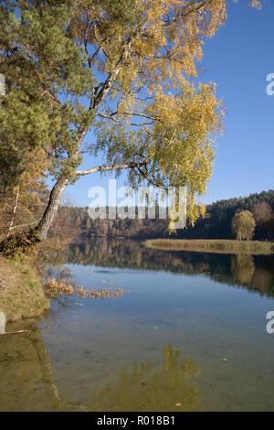 Wald mit Birke in einem See auf Herbst, Reflexion widerspiegeln, ruhig, friedlich und entspannend - Stockfoto