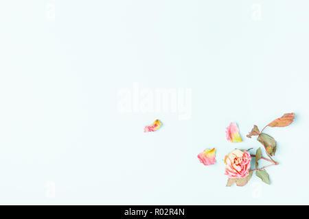 Blumen Komposition. Rahmen aus getrockneten rosa Blüten auf blauem Hintergrund. Flach, Ansicht von oben, kopieren Raum - Stockfoto