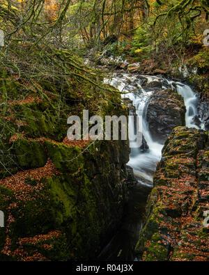 Die herbstliche Farben auf Schwarz Linn fällt in der Einsiedelei auf dem Fluss in der Nähe von Dunkeld Braan in Perthshire - Stockfoto
