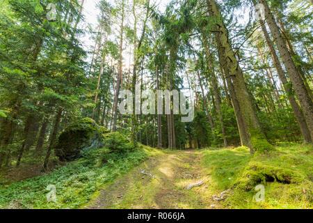 Wald Wald Bäume mit Hintergrundbeleuchtung durch goldenes Sonnenlicht vor Sonnenuntergang mit Sonnenstrahlen durch Bäume auf Waldboden leuchtenden Baum, Natur - Stockfoto