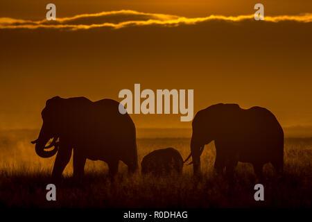 Dieses Bild von der Elefant ist in der Amboseli in Kenia getroffen, - Stockfoto