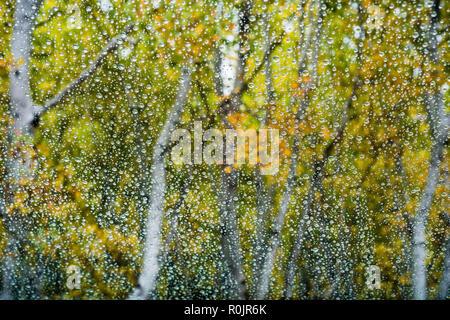 Regentropfen auf dem Fenster, bunte Bäume auf dem Hintergrund; - Stockfoto