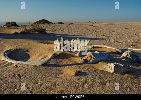 Walknochen, gebleicht in der Sonne liegen auf dem Sand bei Meob Bay Walfangstation, Namibia, Afrika - Stockfoto