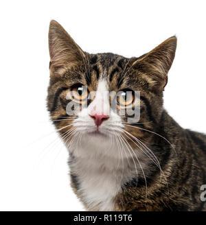 Kätzchen - Stockfoto