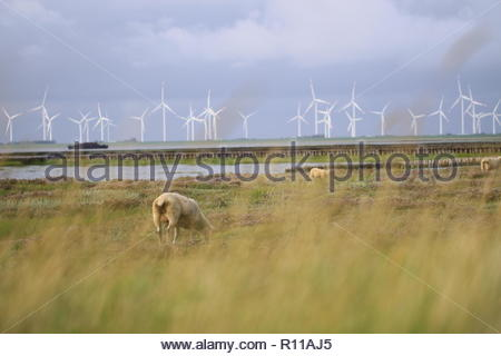 Windmühlen in einem Feld - Stockfoto