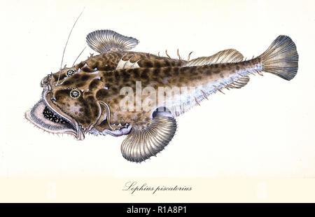 Internet, das Fisch im Meer datiert