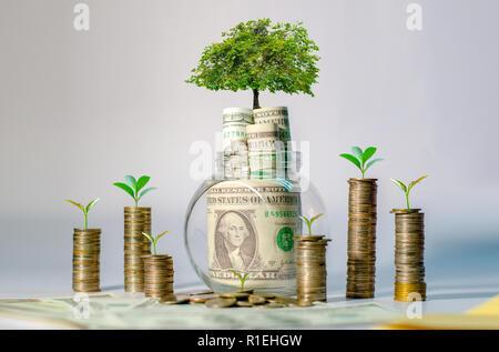 Geld Wachstum spart Geld. Oberen baum Münzen gezeigt Konzept für wachsende Unternehmen - Stockfoto