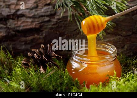 Glas von duftenden aromatischen Honig im Moos vor dem Hintergrund von texturierten Baumrinde. Close-up. - Stockfoto