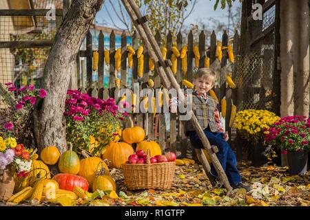Im Herbst sammeln Äpfel auf dem Bauernhof. Kinder sammeln Früchte im Korb. Spaß im Freien für die Kinder. Herbst Ernte der Äpfel, Kürbisse. - Stockfoto