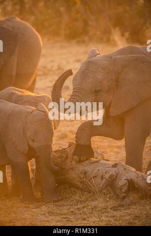 Baby Elefanten ausüben - Stockfoto