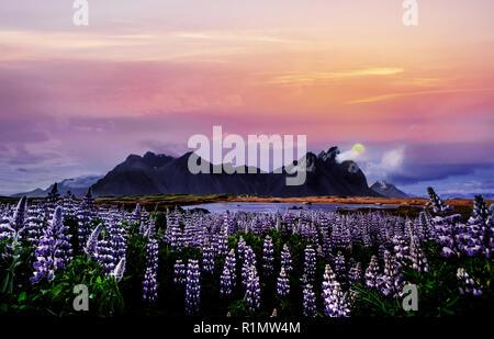 Sonnenuntergang über den Bergen. e malerische Landschaften mit Wäldern und Bergen von Island. Wilde Blaue Lupine blühen im Sommer - Stockfoto