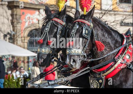 Dunkle Pferde tragen rot und gelb gefiederten Kopfbedeckungen stand in der Sonne. Traditionelle Pferdewagen für Tarife in Krakau warten - Stockfoto