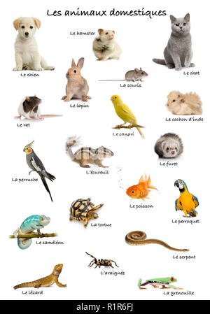 Collage der Haustiere und Tiere in französischer Sprache vor weißem Hintergrund, Studio shot - Stockfoto