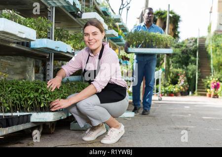 Erfahrene Mitarbeiterin Sämlinge, die bei der Gartenarbeit im Gewächshaus - Stockfoto