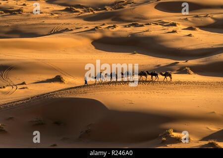 Kamel Fahrradkarawane in der Wüste Sahara bei Merzouga, Marokko   Kamelkarawane in der Sahara in der Nähe von Merzouga, Königreich Marokko, Afrika - Stockfoto