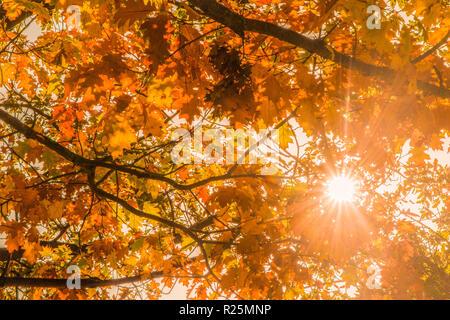 Die Sonne bricht durch einige Blätter im Herbst - Stockfoto