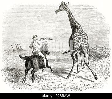 Alte Abbildung: Darstellung von Hunter Charles Baldwin Jagd Giraffe. Von unbekannter Autor, Publ. Bei le Tour du Monde, Paris, 1863 - Stockfoto