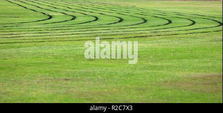 Low Angle View von Frisch lackiert schwarz Fahrbahnmarkierung Marken für einen lokalen Rat sportliche Laufbahn. Üppig grüne Gras Sportplatz in gutem Zustand - Stockfoto