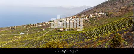 Weinberge über Lavafelder in Fuencaliente, La Palma, Kanarische Inseln - Stockfoto