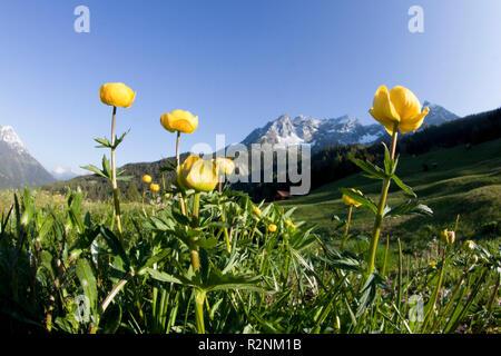 Blumenwiese auf der Dawin Alp, Lechtaler Alpen, Tirol, Österreich. - Stockfoto