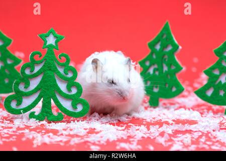Cute Hamster auf rotem Hintergrund mit Weihnachtsbaum Schnee - Stockfoto