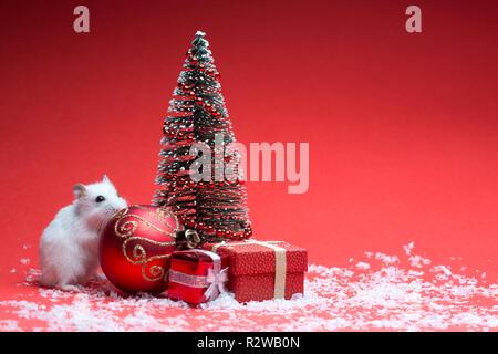Cute Hamster auf rotem Hintergrund mit Weihnachtsbaum und Geschenke - Stockfoto