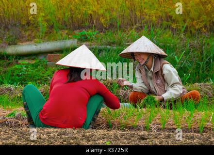 Zwei glückliche Vietnamesische Frauen in Coolie Hats das Einpflanzen von Pflanzgut in Ihrer Landschaft Market Garden im Küstengebiet von Nord Vietnam, Südostasien - Stockfoto