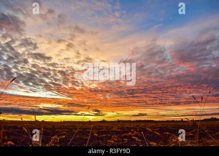 Einen schönen Sonnenaufgang hier in Michigan. Wenn die meisten Leute denken, ein Sonnenaufgang in Michigan Sie denken über den See. Ich denke an Ackerland wie dieses. - Stockfoto