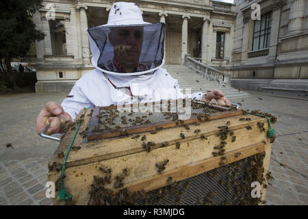 Honigbiene (Apis mellifera), die in der galliera Museum Garten. Schwarm. Nicolas Geant, Imker in Paris, Frankreich - Stockfoto