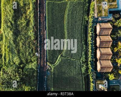 Indonesien, Bali, Ubud, Luftaufnahme von Reisfeldern