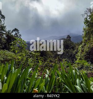 Laurisilva Wald auf der Insel Madeira von stürmischem Wetter - Stockfoto