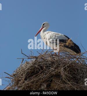 Schöne Storch steht im nest - Stockfoto