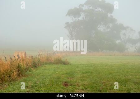 Foggy Dawn in Warrnambool, Australien. Schönen Morgen Licht. - Stockfoto