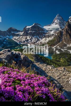 Blühende Saison am Berg Assimiboine - Stockfoto