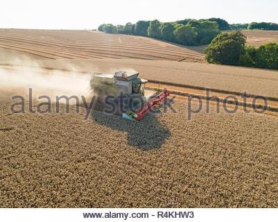 Ernte Antenne Mähdrescher und Sommer Weizenfeld farm Erntegut - Stockfoto